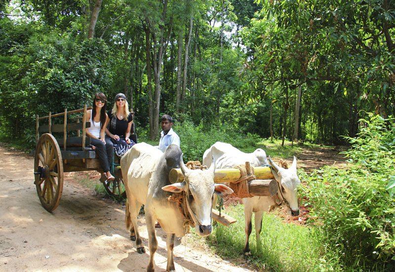 Bullock Cart Rides